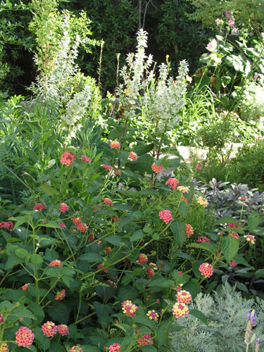 Front Garden.in May